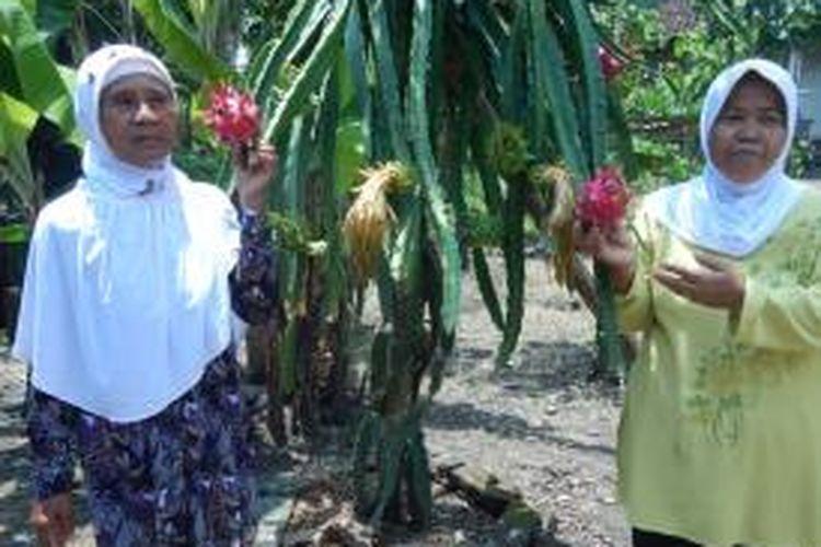 Desa Sambirejo di Kecamatan Bangorejo, Kabupaten Banyuwangi, Jawa Timur.