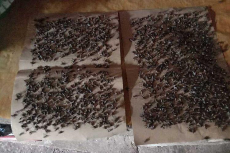 Musim hujan warga Desa Tunggur keluhkan banyaknya lalat dan bau kurang sedap karena keberadaan kandang ayam. Sayangnya Dinas Peternakan Kabupaten Magetan tidak pernah turun ke lapangan untuk memberikan solusi untuk pengatiran kandang ayam.