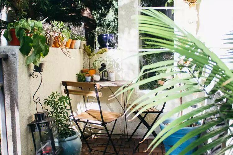 Tanaman herbal di rumah.