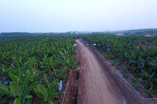 Produsen Buah-buahan Halofresh Luncurkan Merek