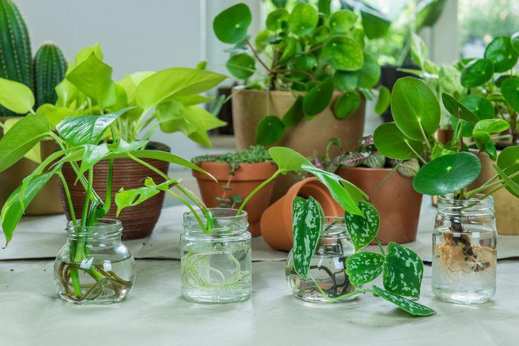 Ilustrasi menanam tanaman di dalam air.