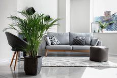 5 Jenis Pohon Palem yang Cocok Dipelihara di Dalam Ruangan