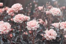 Selain Indah, 12 Jenis Bunga Ini Punya Makna Mendalam