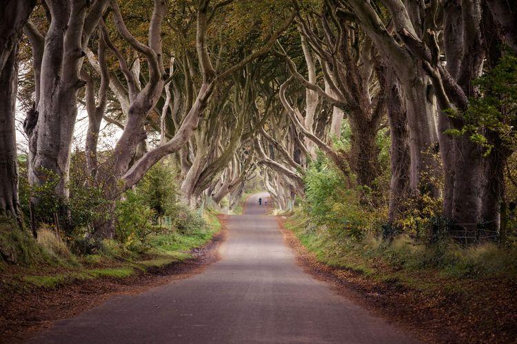 The Dark Hedges di Irlandia Utara terkenal sebagai Kings Road di serial GOT.