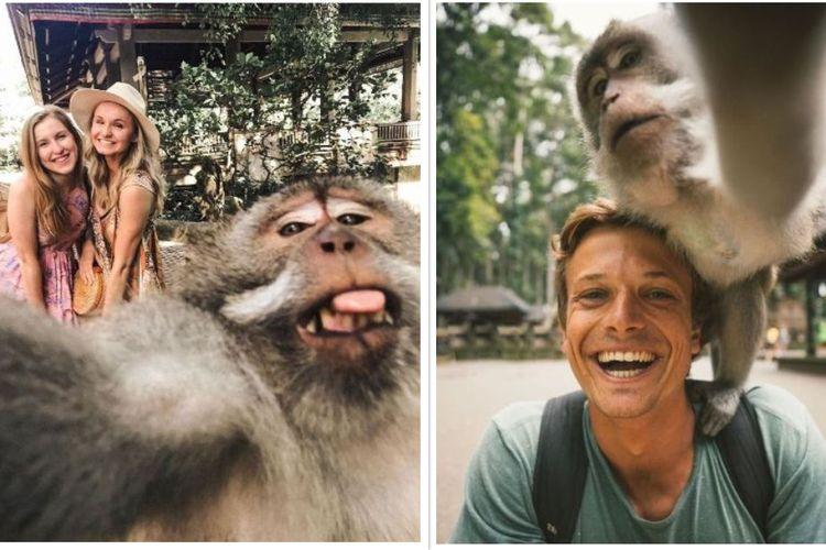 Foto monyet selfie di Bali.