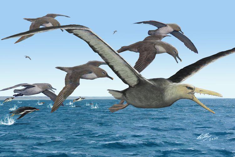 Ilustrasi burung terbesar yang pernah hidup di Bumi. Pelagornithids adalah jenis burung terbesar yang diidentifikasi pernah hidup di Antartika.