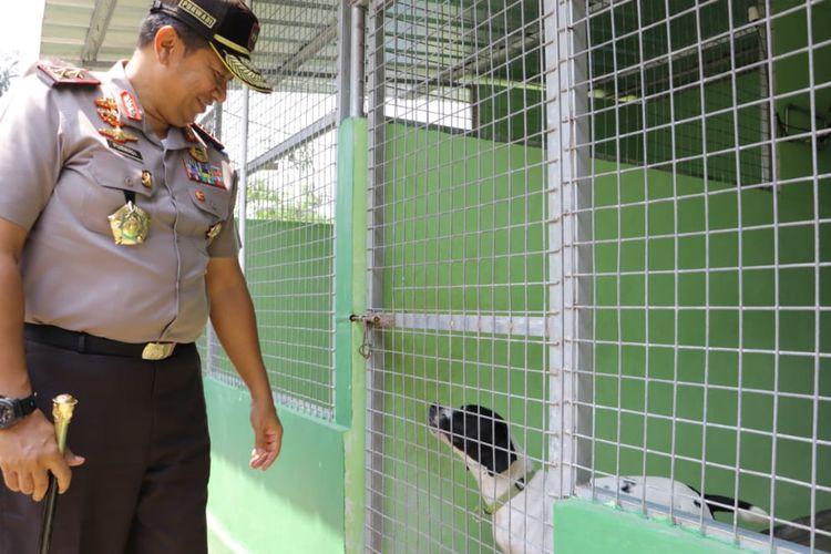 Kapolda Lampung melihat salah satu anjing pendeteksi satwa liar di Wildlife Kalianda, Jumat (6/9/2019). Anjing pendeteksi kini digunakan di Pelabuhan Bakauheni untuk mencegah penyelundupan satwa liar dari dan ke Sumatra.