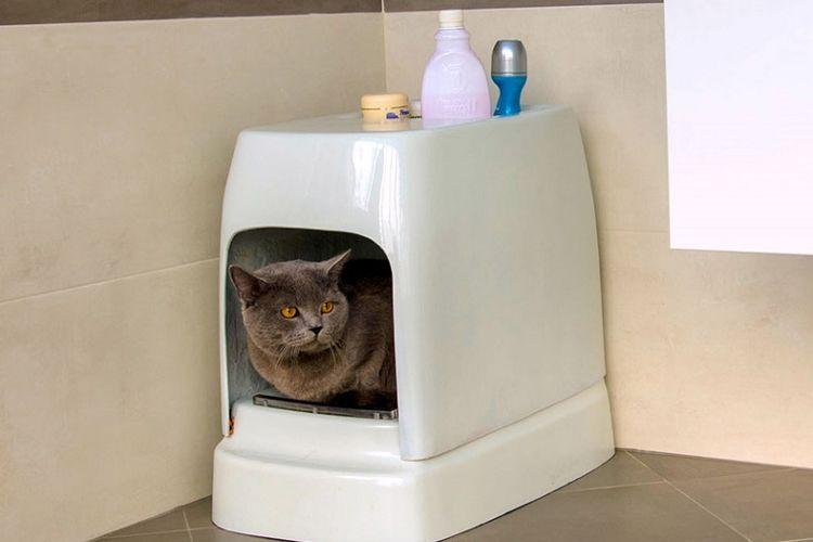 Catolet, toilet untuk kucing dan anjing kecil.