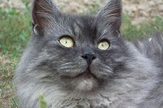 Alasan Kucing Peliharaan Tidak Akan Menyambut Kehadiran Kucing Baru