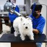 Saat Anjing Bersekolah, Hidup Mewah dan Habiskan Biaya hingga Puluhan Juta Rupiah