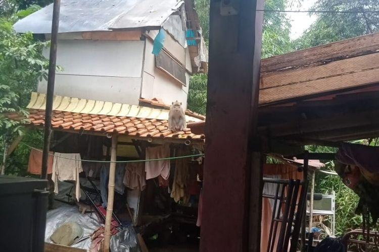 Seekor monyet liar terlihat berada di atas genteng rumah warga di Kampung Bojong, RT 03 RW 08, Kelurahan Pamoyanan, Kecamatan Bogor Selatan, Kota Bogor, Jumat (21/2/2020).