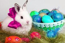 Mengapa Paskah Identik dengan Telur dan Kelinci?