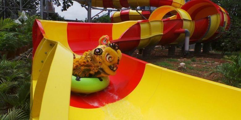 Barongsai meluncur dari wahana Drahon Slide Ocean Water Adventure Taman Impian Jaya Ancol, Jakarta, Senin (8/2/2016). Barongsai tersebut ditampilkan oleh Perguruan Cetiya Kusala Cetana berasal dari Desa Tegal Angus, Kecamatan Teluk Naga, Kota Tangerang, Banten.