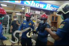 Petugas Damkar Evakuasi Ular Sanca 3 Meter yang Masuk ke Toko Ekspedisi