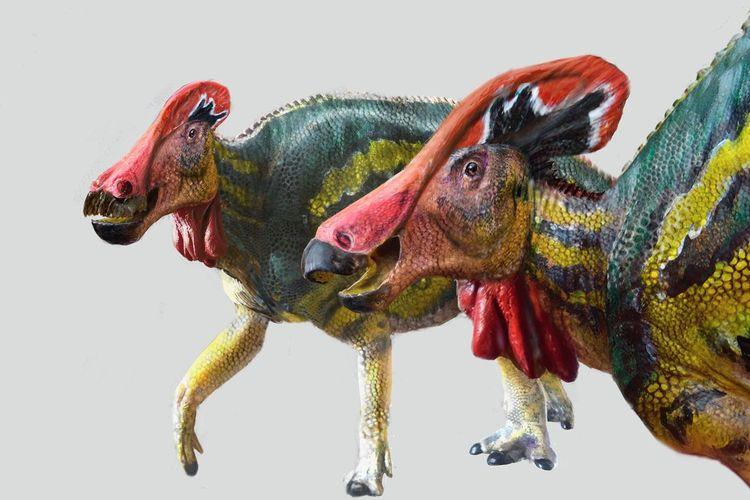 Ilustrasi spesies baru dinosaurus yang ditemukan di Meksiko, Tlatolophus galorum. Dinosaurus ini memiliki jambul di kepalanya, yang diyakini berwarna cerah dan berfungsi untuk berkomunikasi dengan kawanannya mirip gajah.