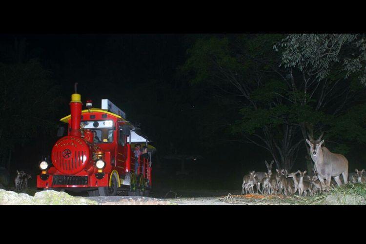 Safari Malam di Taman Safari Bogor.