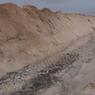 Khawatir Kontaminasi Baru, Jutaan Cerpelai yang Dikubur Diimbau untuk Digali Kembali