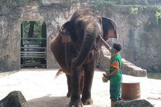 Jelang Beroperasi Kembali, Taman Margasatwa Ragunan Disemprot Disinfektan