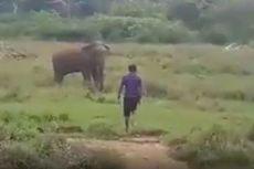 Berusaha Hipnosis Seekor Gajah Liar, Pria Ini Tewas Terinjak