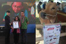 3 Rekor Muri Untuk Peternakan Sapi Bali di Lombok, Apa Rahasianya?