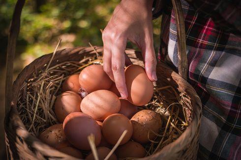 Tips Menyimpan Telur agar Lebih Tahan Lama