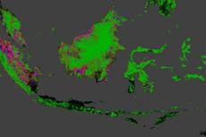 Wajah Menyedihkan Hutan Indonesia dalam Peta Google Earth