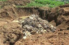 50 Ton Ikan Gagal Ekspor Membusuk, Warga 2 Kelurahan Pusing dan Mual