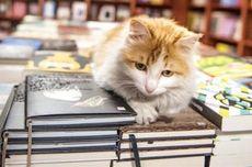 Riset Ungkap Cara Kucing Merebut Hati Manusia