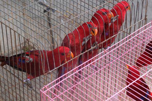 268 Ekor Burung Nuri Liar dari Maluku Gagal Diperdagangkan di Makassar