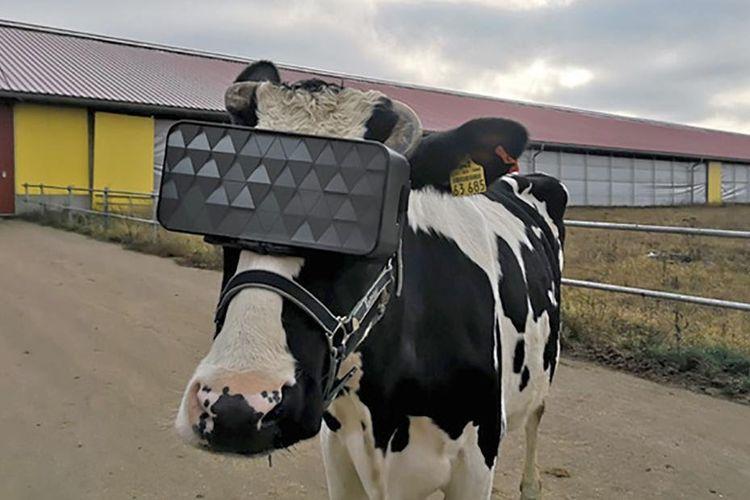 Ilustrasi sapi dipakaikan headset VR.