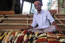 Mengenal Luki, Petani yang Sukses Budidayakan Jagung Warna-warni