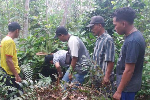 Harimau Sumatera dan Dua Anaknya Ditemukan di Kebun Karet Warga Riau