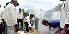 Jaga Ketahanan Pangan, BRG Gelar Pelatihan Pertanian Lahan Gambut di Merauke