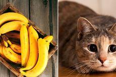 [POPULER TRAVEL] Cara Simpan Pisang   Kondisi Kafe Kucing