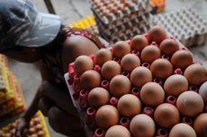 Harga Ayam dan Telur Jatuh, Ini Harapan Peternak pada Pemerintah