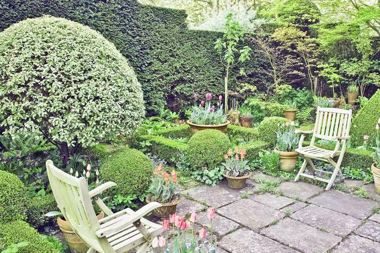 Ilustrasi kebun di rumah.