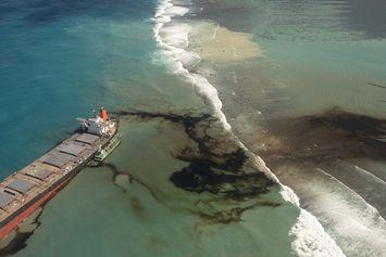 Banyak Lumba-lumba Mati Pasca Minyak Tumpah, Ribuan Orang Berdemo di Mauritius