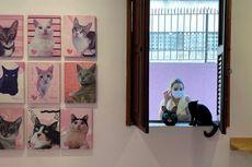 Isolasi Mandiri di Rumah, Bagaimana Agar Kucing Tak Tertular Covid-19?