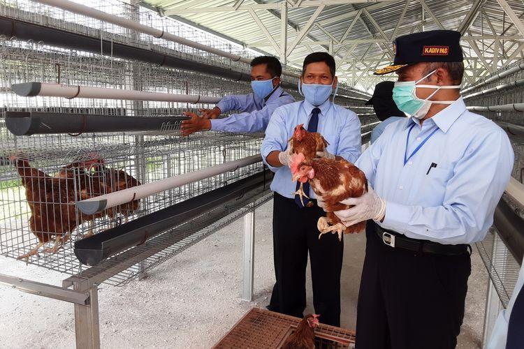 Kepala Divisi Pemasyarakatan Kantor  Wilayah Kementrian Hukum dan Ham Jawa Tengah,  Marasidin Siregar, saat memegang ayam petelur. KOMPAS.COM/SLAMET PRIYATIN