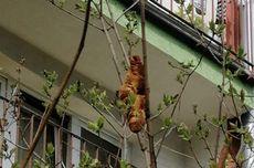Warga Heboh Ada Makhluk Aneh di Pohon sampai Telepon Polisi, Ternyata...