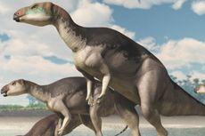 4 Pembagian Zaman Prasejarah Berdasarkan Geologi