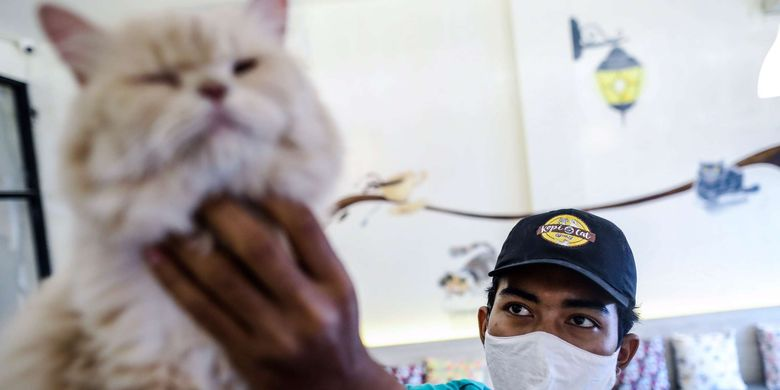 Pekerja melakukan perawatan terhadap kucing peliharaan di Kopi Cat Cafe by Groovy, Kemang, Jakarta Selatan, Jumat (15/5/2020). Menanggapi imbauan pemerintah untuk melakukan jaga jarak sosial, kafe hewan Kopi Cat Cafe by Groovy tutup sementara.