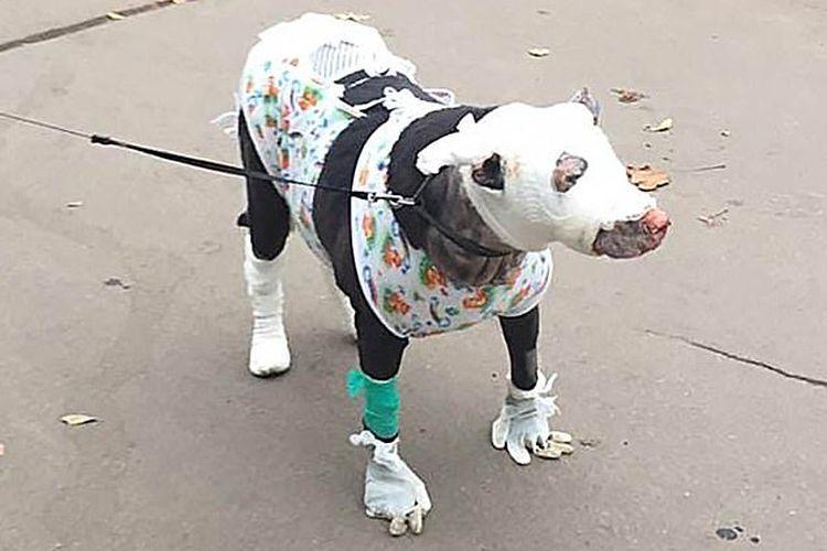 anjing yang selamatkan pasien rumah sakit yang terjebak kebakaran