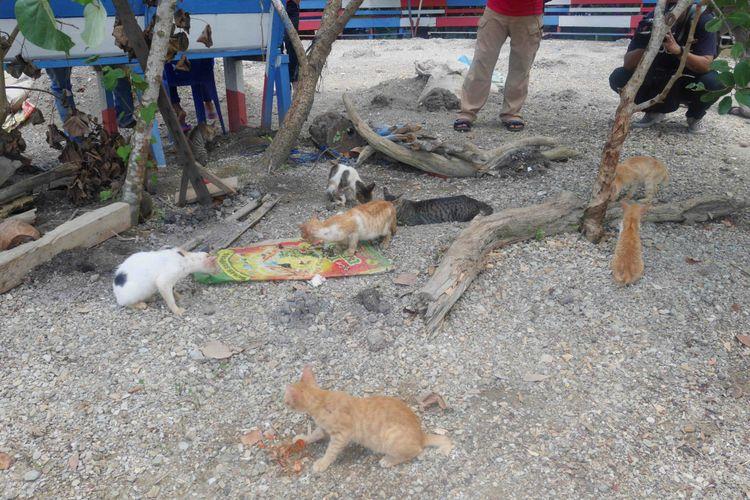 Kucing-kucing yang ada di Pulau Kucing yang merupakan salah satu obyek wisata di Desa Fukweu, Kecamatan Sanana Utara, Kepulauan Sula, Maluku Utara, Sabtu (14/4/2018).