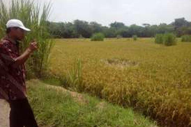 Aluysius Adiyo Agung (42), mantan petinggi perusahaan asing yang banting stir menjadi petani.