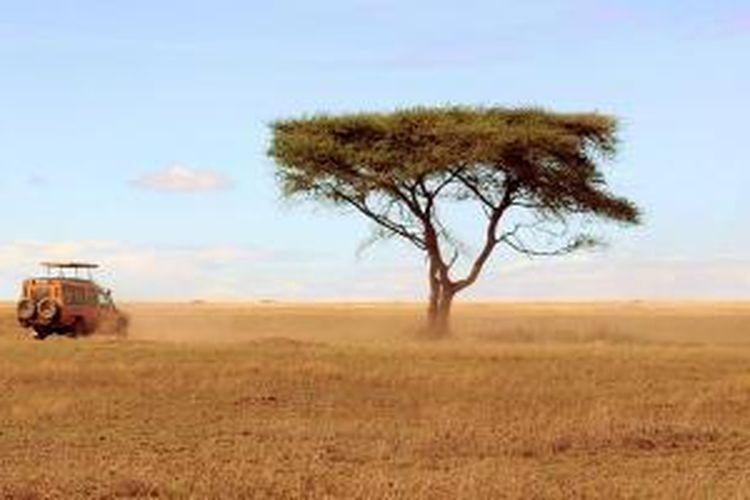 Safari di Tanzania.