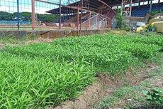Lama Tak Dipakai, Stadion Mattoanging Ditanami Sayuran