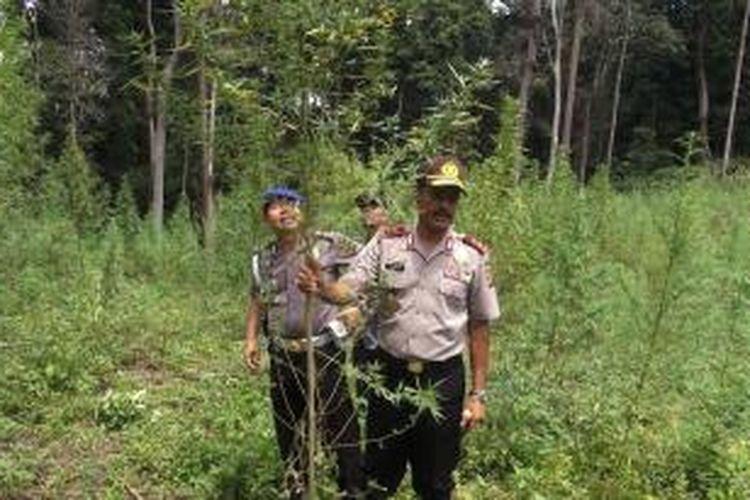 Kepolisian Resort Aceh Besar menemukan dan memusnahkan 34 hektar ladang ganja di Pegunungan Lamteuba, Aceh Besar, Aceh, Rabu (19/8/2015).