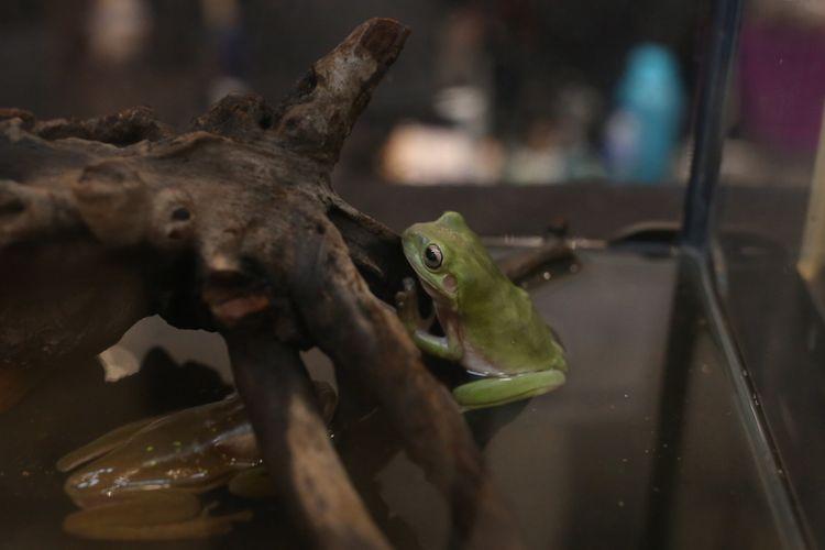 Katak di Indo Pet Expo