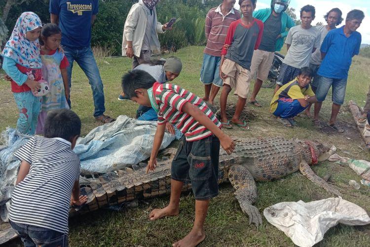 Buaya cumping, penghuni muara sungai Mansapa Nunukan Selatan dibunuh karena menewaskan bocah 8 tahun, Cumping sudah bertahun tahun menghuni sungai tersebut dan akrab dengan warga sekitar